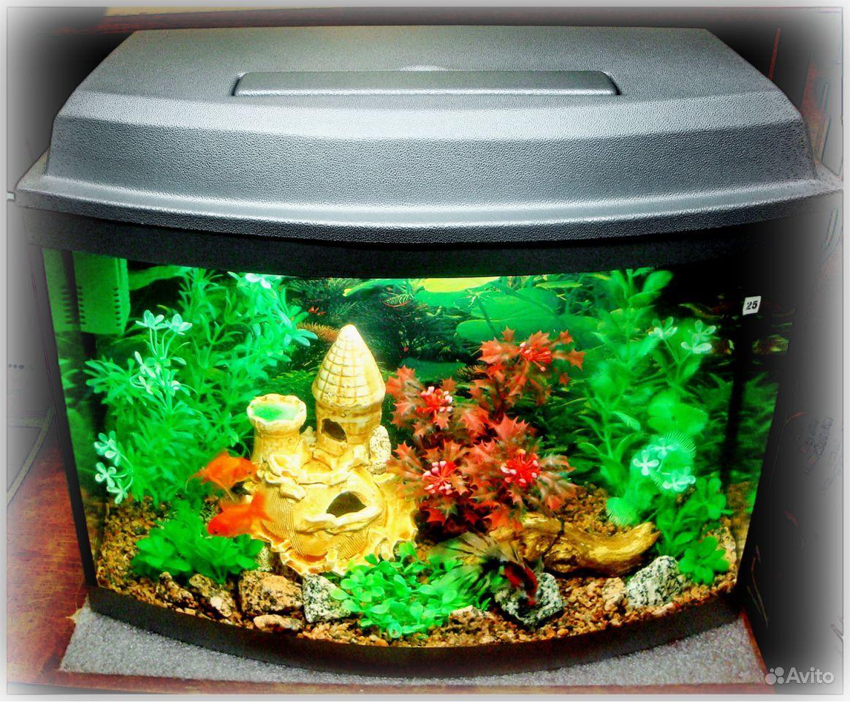 Pictures of cold water aquarium fish