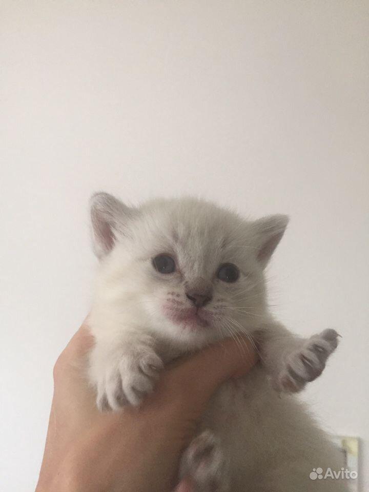 Котята в Тамбове - фотография № 5
