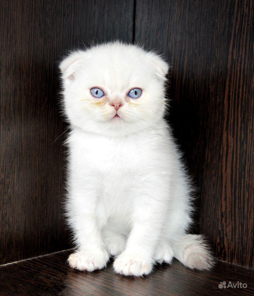 Очаровательные котятки