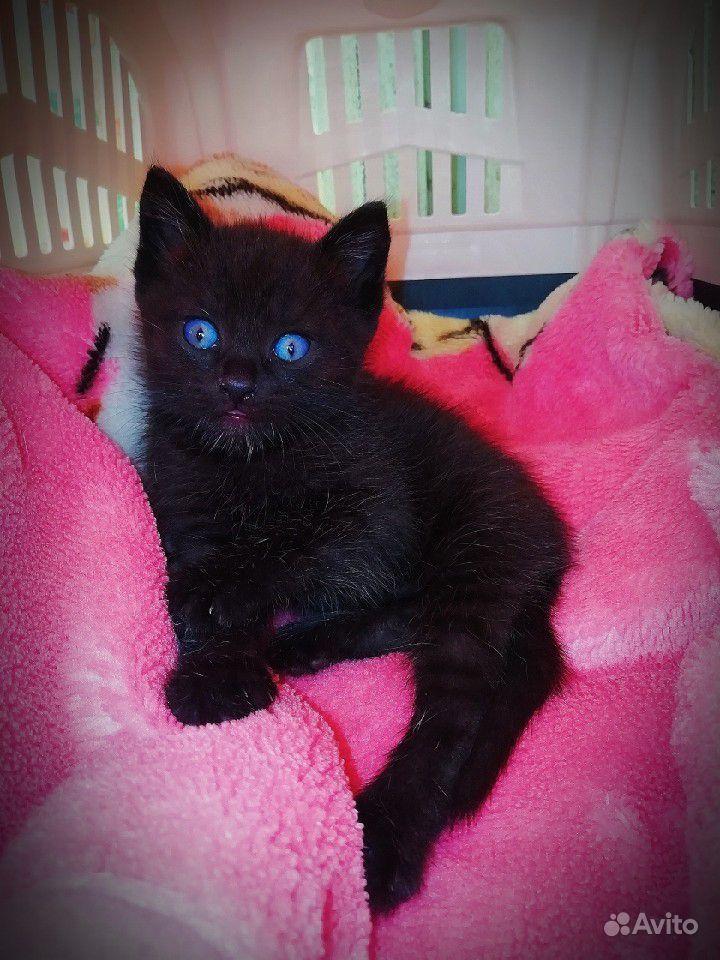 Чёрный котенок с невероятно синими глазами