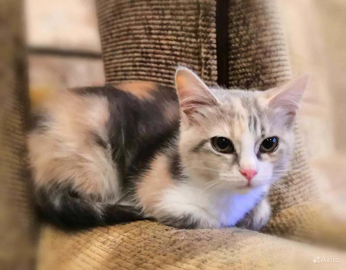 Ласковая кошечка котенок