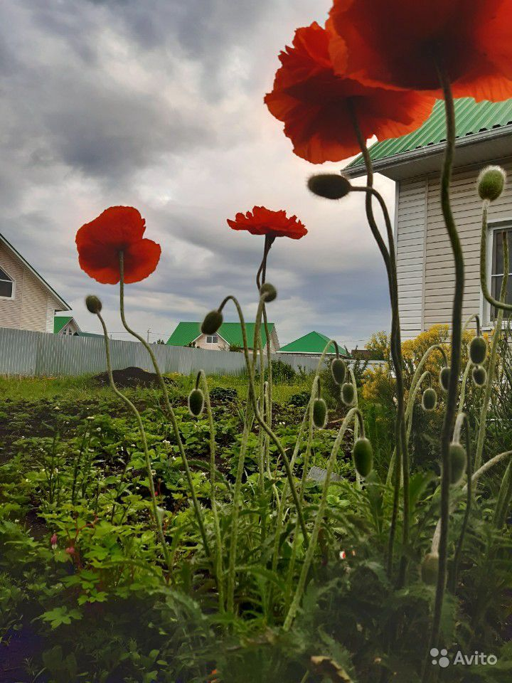 Цветы делюсь красотой или меняюсь купить на Зозу.ру - фотография № 3