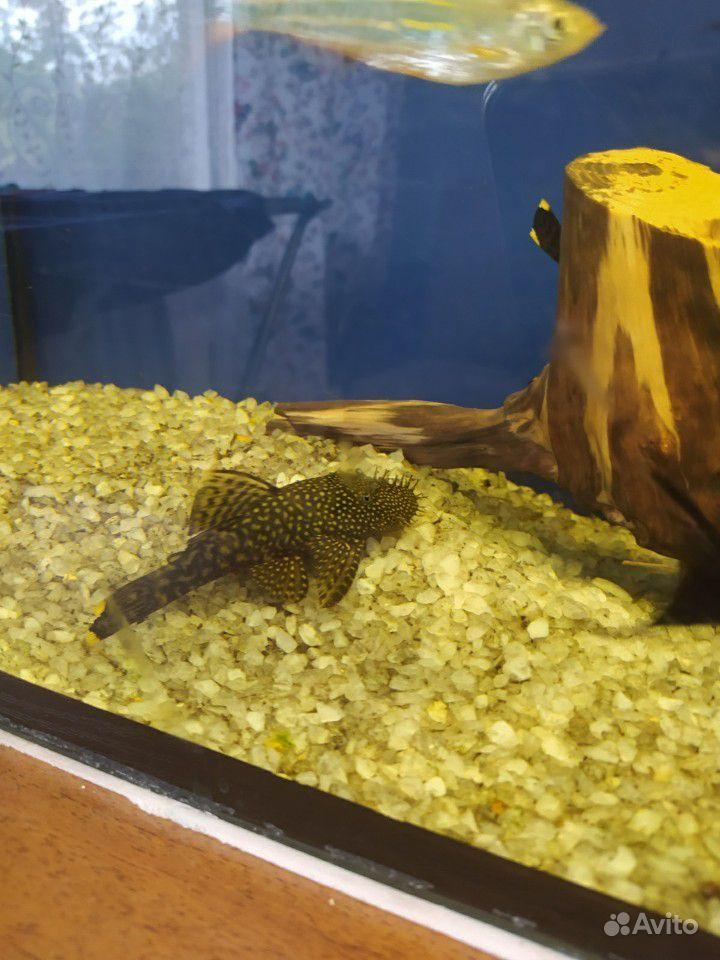 Аквариум 80л + рыбки купить на Зозу.ру - фотография № 3