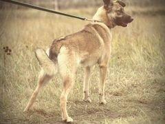 Собака Кози в дар