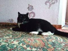 Кошка 5 лет, стерилизована