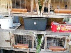 Клетки вместе с кроликами продам