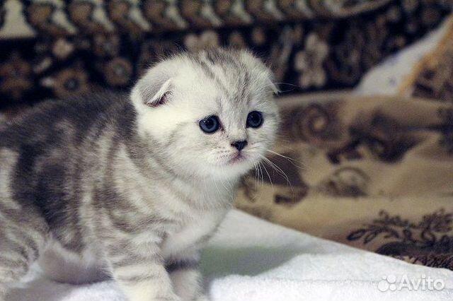 фото кошек продать