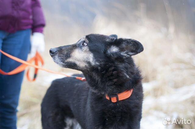 Собака с проникновенным взглядом ждет хозяина купить на Зозу.ру - фотография № 3