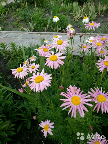 Цветы  89775052387 купить 4