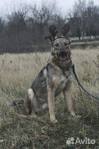 Собака Смайлик в дар купить на Зозу.ру - фотография № 3