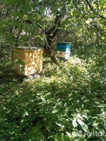 Пчелы с домиками 89082811313 купить 8
