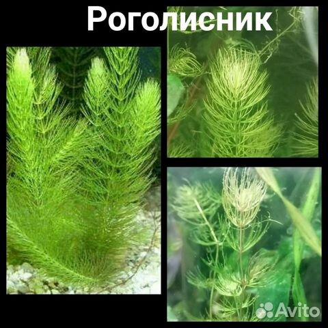 Аквариумные растения - 9 шт  89519173738 купить 9