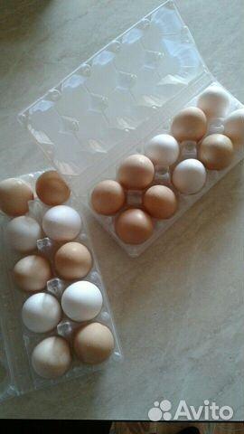 Яйца  купить 1