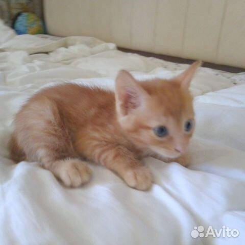 Кошка  89787802488 купить 2