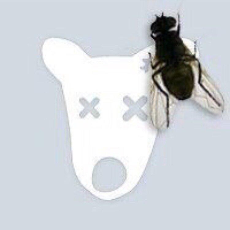 Боссами, картинки прикольные на аву с мухой