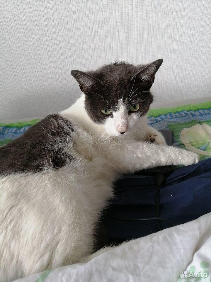 Кошка Ириска, в добрые руки  89110251756 купить 3