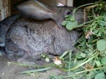 """Кролики """"мясные"""""""