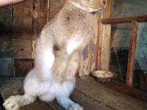 Продам кроликов разных пород и возрастов