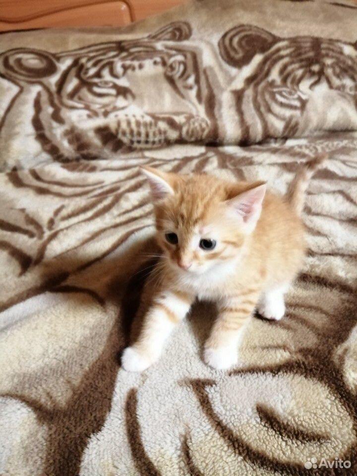 Котенок(кот)  89040015219 купить 2