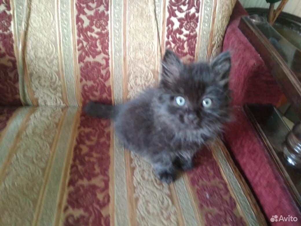 Кошка  89372169300 купить 3