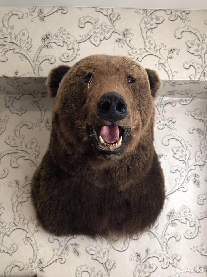 Медведь  89319782225 купить 1