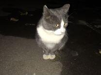 Кот породистый