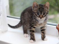 Котенок Дашенька в добрые руки