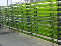 Производство натуральной продукции из водорослей