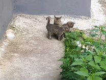 Котята бесплатно 1мес