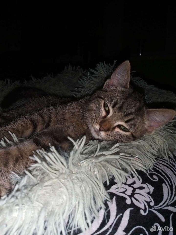 Отдам серого котенка в добрые руки  89502787846 купить 6